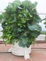 Mô hình tháp rau hữu cơ Eco tại Vũng tàu