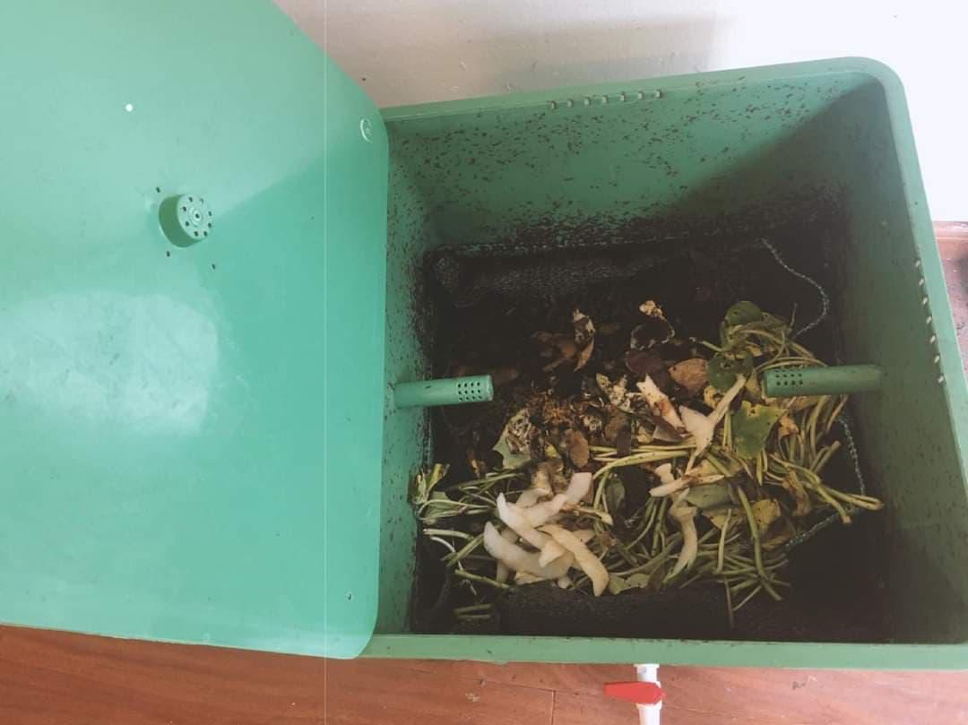 cách nuôi trùn quế xử lý rác tai nhà