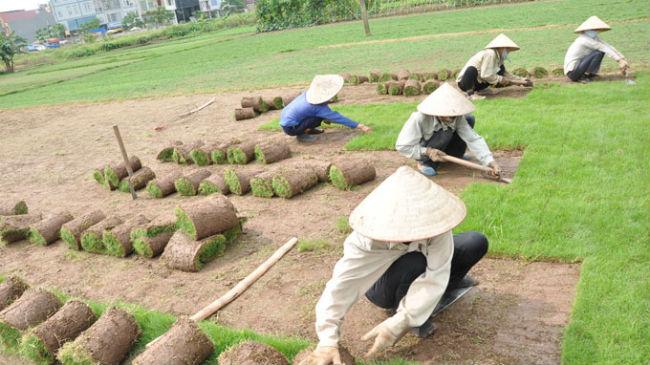 Dịch vụ trồng cỏ và cây xanh