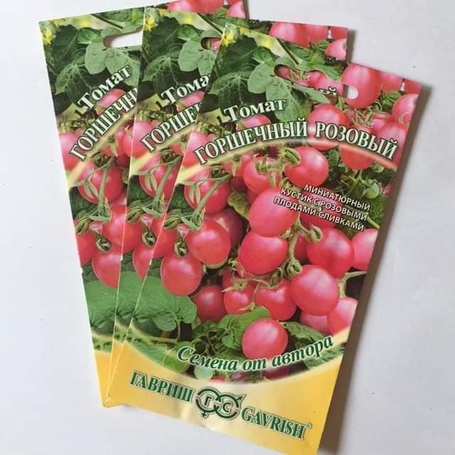 Cà chua bi lùn hồng