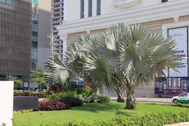 Báo giá thiết kế cảnh quan sân vườn